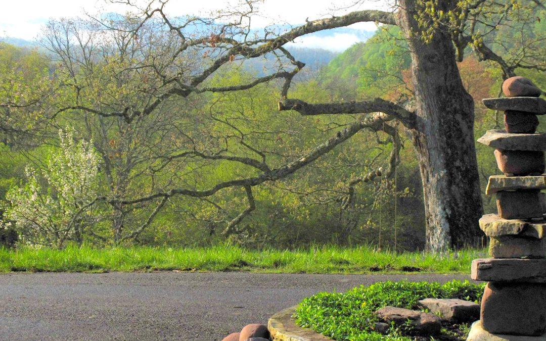 The Psychology of Meditation Retreat
